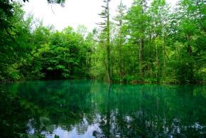 Spiegelbild des Waldes