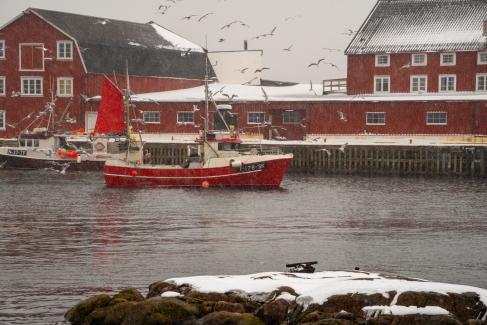 Einlaufendes Fischerboot in den Hafen von Henningsvær