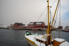 Boote im Hafen von Henningsvær