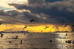 Möwen und Seeadler auf dem Meer