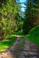 Strada forestale Tof Strent
