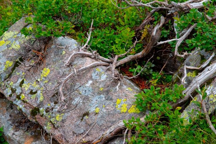Stein mit Wurzel am Wanderweg